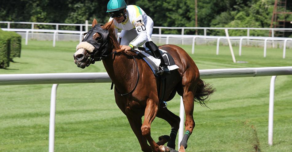 apostar em cavalos - entenda os tipos de apostas do turfe