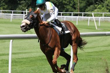 Corridas de cavalos como apostar